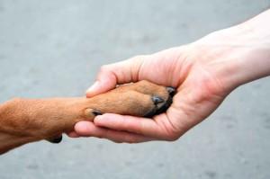aiutare il canile di carpi