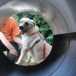 INAUGURAZIONE MOBILITY DOG