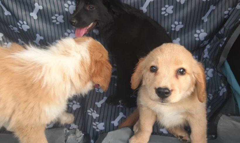 Cuccioli in cerca di casa