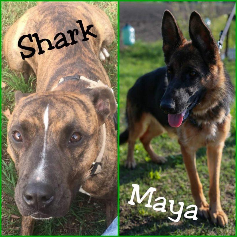 Un aiuto per Shark e Maya
